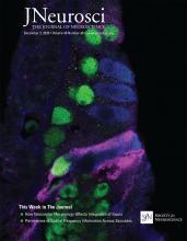 The Journal of Neuroscience: 40 (49)