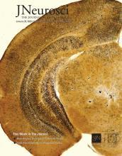 The Journal of Neuroscience: 40 (5)