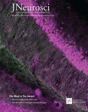 The Journal of Neuroscience: 40 (50)