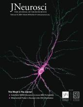 The Journal of Neuroscience: 40 (8)