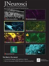 The Journal of Neuroscience: 41 (10)