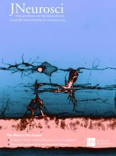 The Journal of Neuroscience: 41 (25)