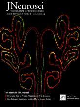 The Journal of Neuroscience: 41 (26)