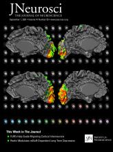 The Journal of Neuroscience: 41 (35)