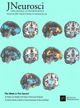 The Journal of Neuroscience: 41 (8)